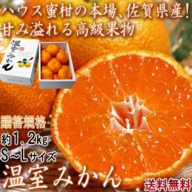 温室みかん ハウス栽培 約1.2kg S~Lサイズ 佐賀県産 贈答規格 美しい果皮と高糖度の高級みかん! ハウス蜜柑の聖地、佐賀のミカン