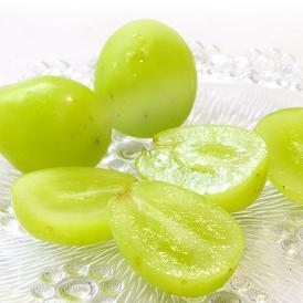 送料無料 味わい抜群の白葡萄、シャインマスカット!ギフト最適