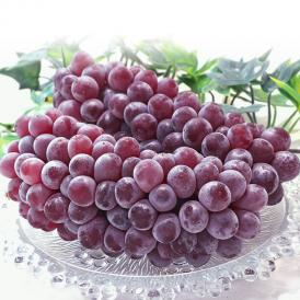 デラウェア 種無し葡萄 約2kg 8~14房入り 贈答規格 山形県産 JA共撰品 高い糖度と程よい酸味の人気品種!