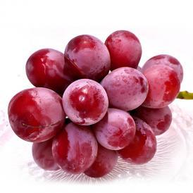 クイーンニーナ 高糖度赤ぶどう 約1kg 2房入り 山梨県産 贈答規格 大きな粒と濃厚な甘さのギフトフルーツ!お中元にも最適な新品種の葡萄