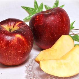 秋映 あきばえ 赤りんご 約5kg 10~16玉 長野・青森県産 贈答規格 濃厚な甘さと程よい酸味!果汁豊富な美味しい赤林檎