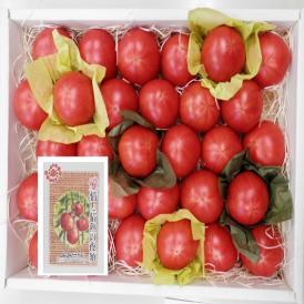 JA高知春野産 甘くて濃厚な味わいのフルーツトマト贈り物にも最適