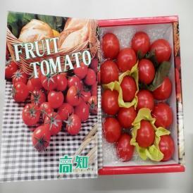 高知県夜須町産濃厚な味わいのフルーツトマト贈り物にも。