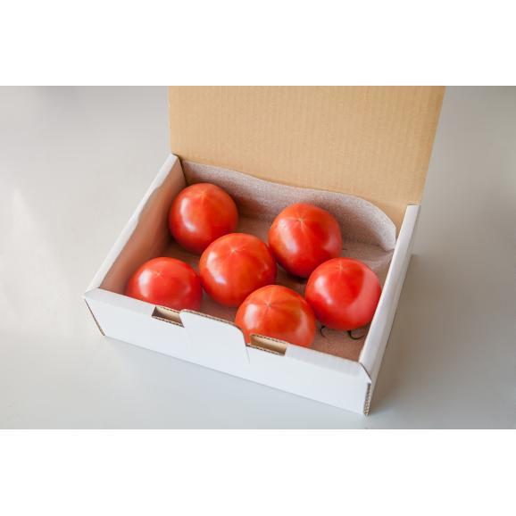 大玉完熟トマト 「まるたかトマト」02