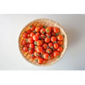 完熟ミニトマト 「まるたかミニトマト」