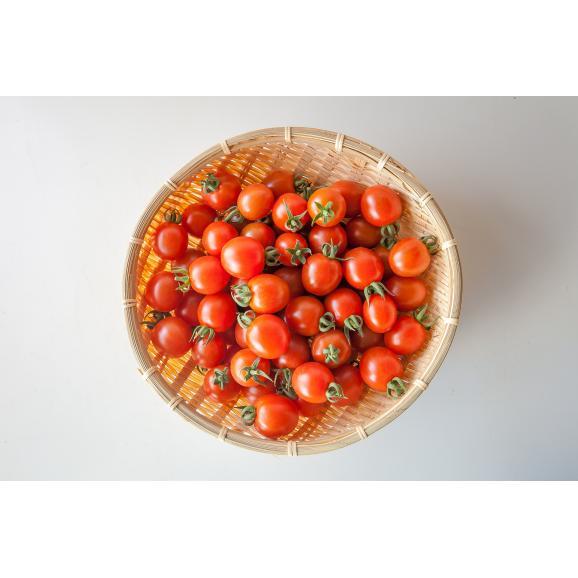 完熟ミニトマト 「まるたかミニトマト」01