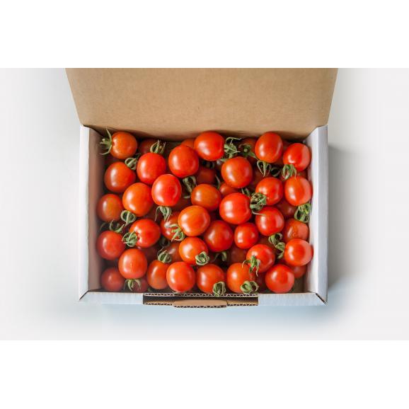 完熟ミニトマト 「まるたかミニトマト」02