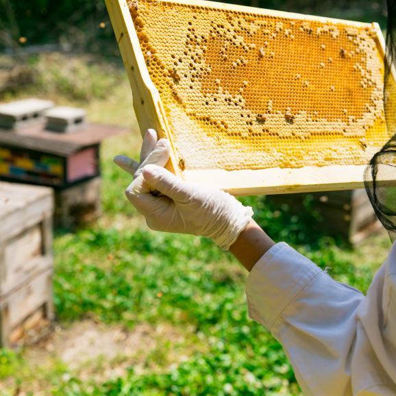 【2021年蜜】大阪都市養蜂の七月蜜02