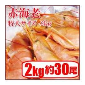 【赤海老刺身用特大サイズ】=業務用/アルゼンチン赤エビ 特大 L1サイズ(約30尾)2kg生食用/アカエビ/大海老