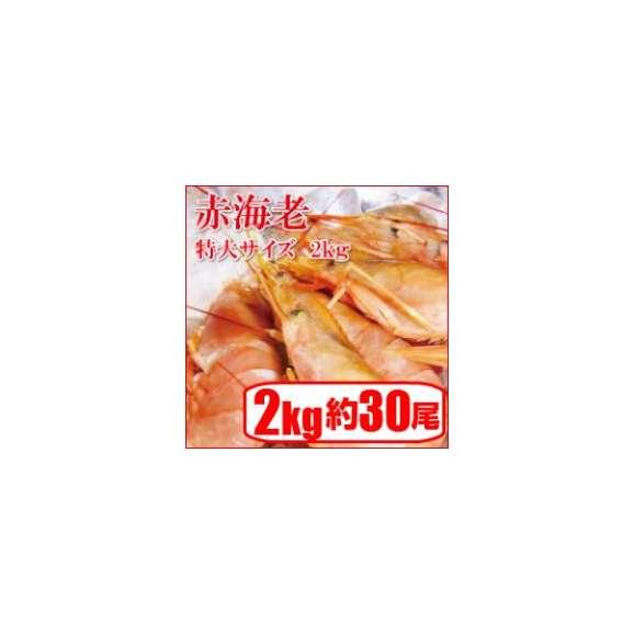【赤海老刺身用特大サイズ】=業務用/アルゼンチン赤エビ 特大 L1サイズ(約30尾)2kg生食用/アカエビ/大海老01