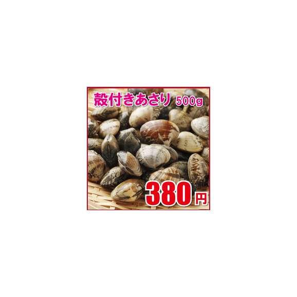 【殻付きあさり】=業務用冷凍貝/アサリ砂抜き済ボイル/1パック500g/浅蜊/浅利/ペスカトーレ/チャウダー01