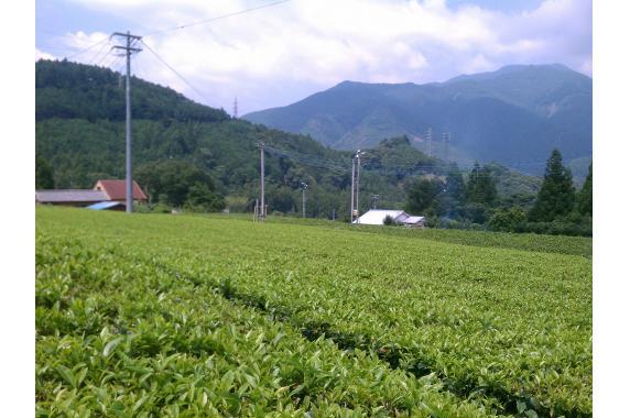 ますいさんちの茶 益井園